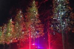 lights c5